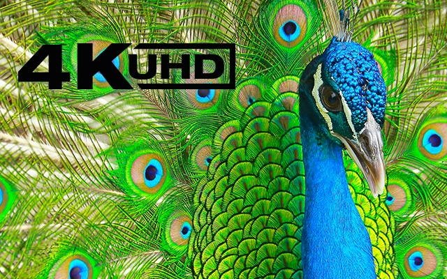 UHD-Website